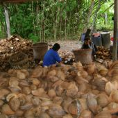 Coconut-Shell-Manufacture-Indonesia